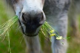 Love That Pasture….!!!