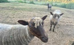 Summer Shear-Styles…